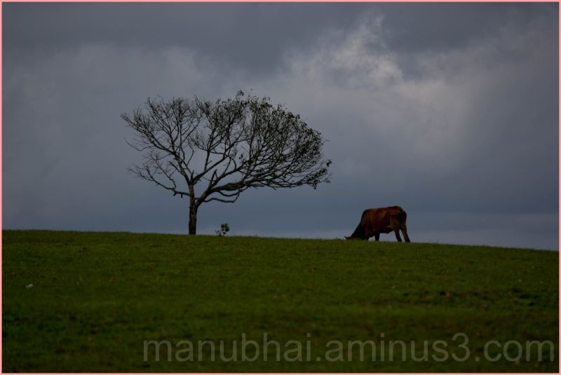 Lonely tree on the top of the Hill