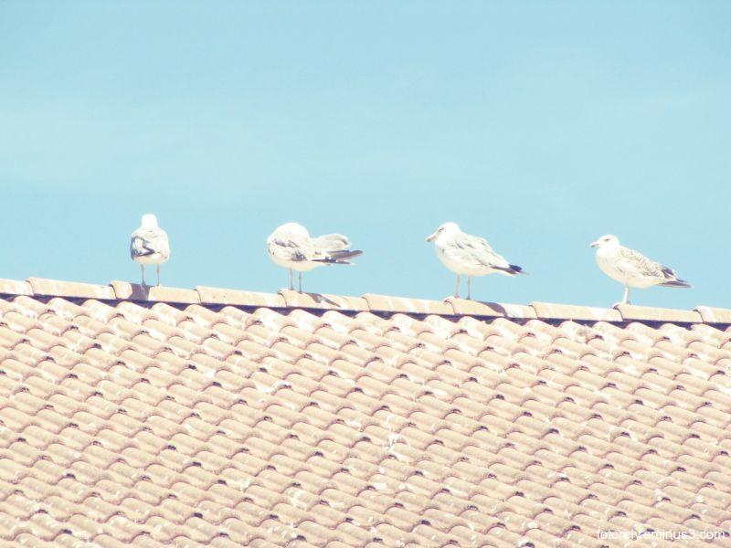 v Seagulls v