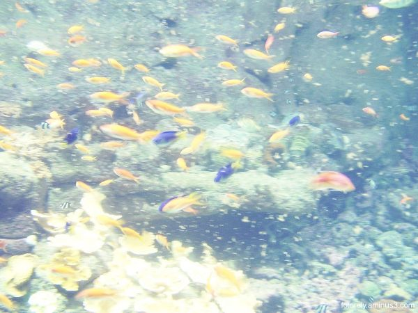 Comme un poisson dans l'eau