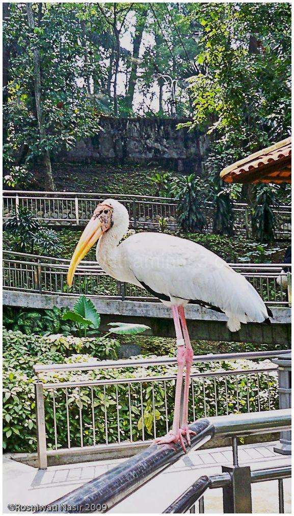 @Birdpark