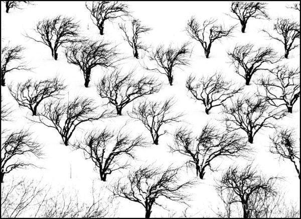 Wind blown trees in winter
