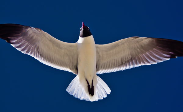 close up shot of a seagull flying