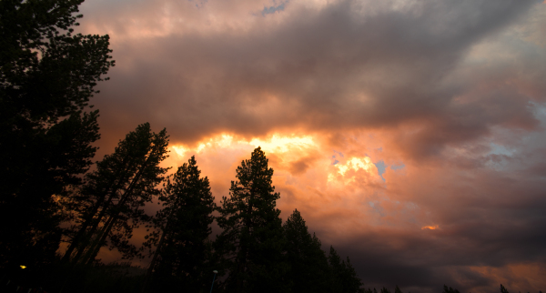 stormy sunset over pine trees