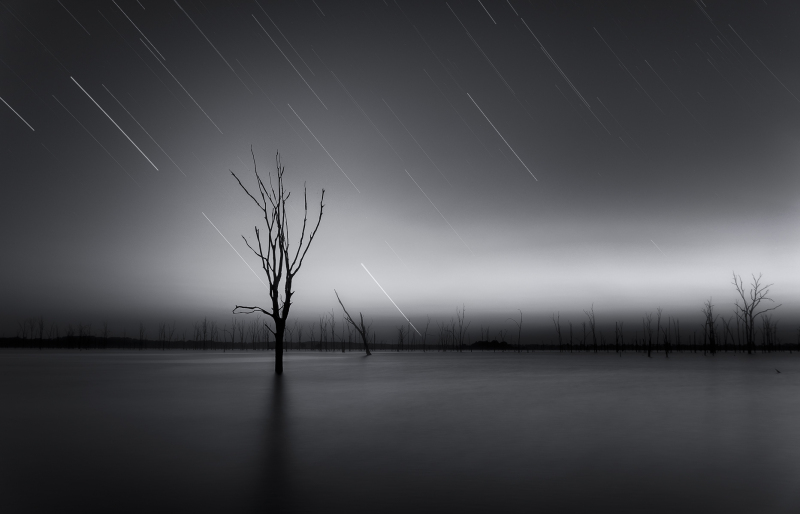 long exposure of tree at lake with star trails