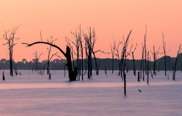Cormorants nesting in trees before night on lake