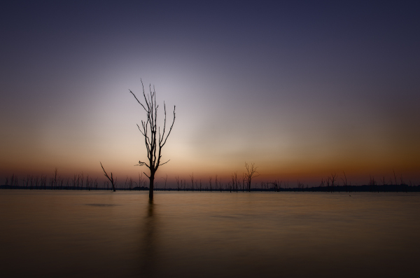 long exposure at sunset of tree in lake