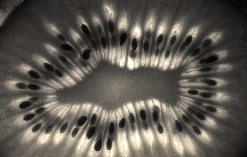 backlit kiwi black and white food photography