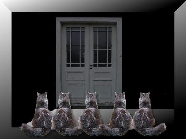 Five Cats #11