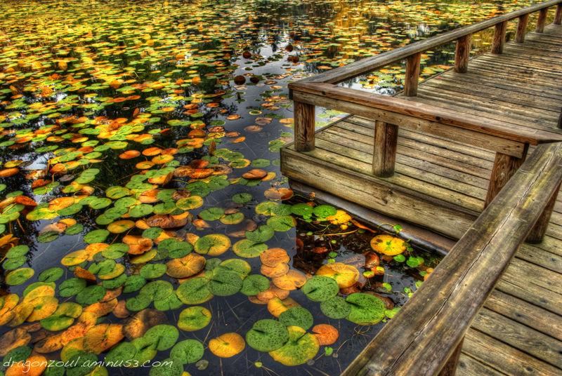 """Lilly pads, Pond, """"Van Dusen Garden"""", Garden,"""