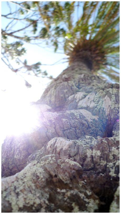 Tree Kangaroo Point Brisbane