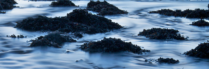 Seaweed on Longniddry Beach, Firth of Forth.