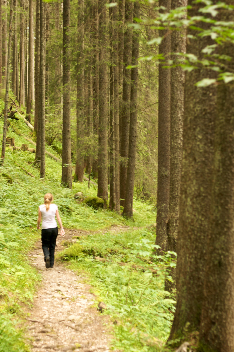 Walk in the Woods, Pine forest, Jess Beard, Eiger