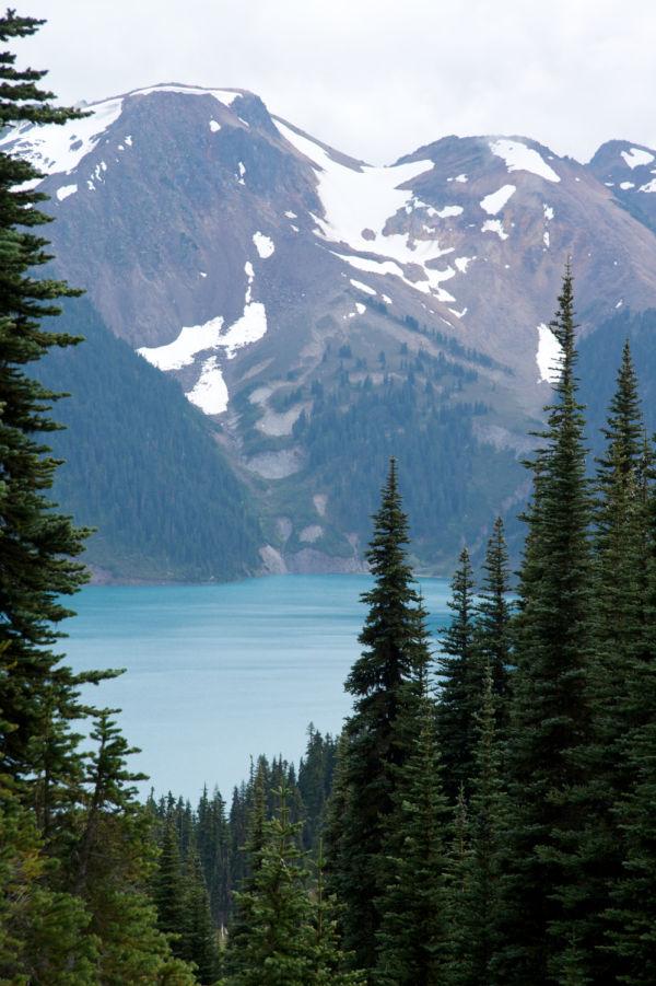 British Columbia, Canada, Garibaldi Lake, Pine