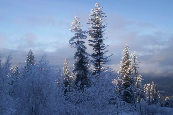 snowyday trees