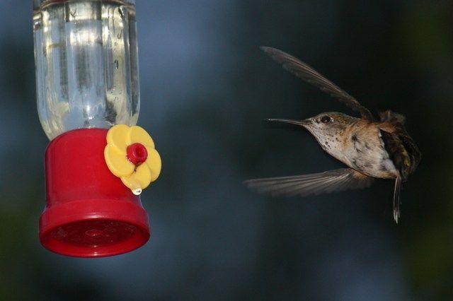 Hummingbirds are back.