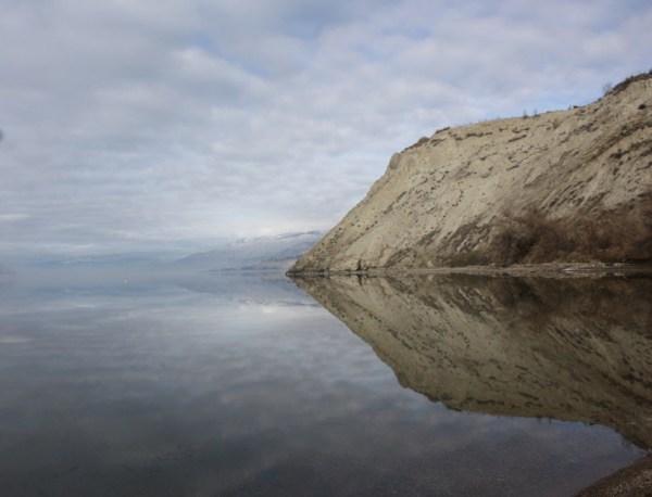 wild reflection