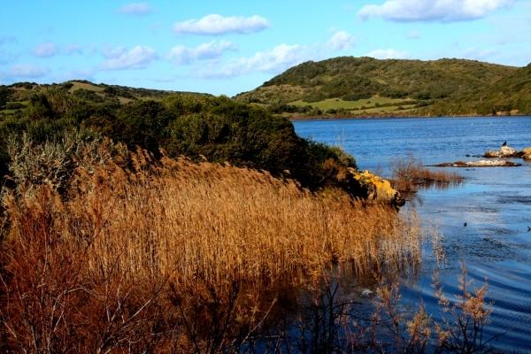 Albufera Landscape
