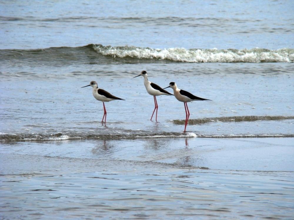 SES SALINES BEACH,MENORCA,SPAIN