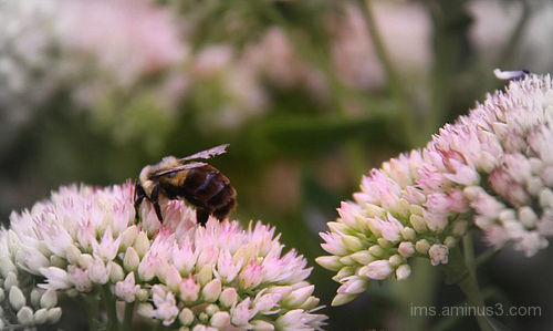 nectar seeker