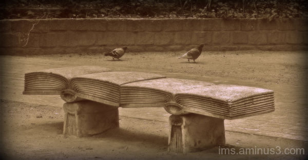 A pair of bookish pigeons in my dream...