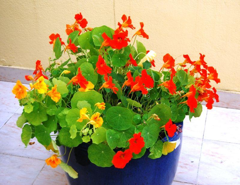 Flores do meu terraço