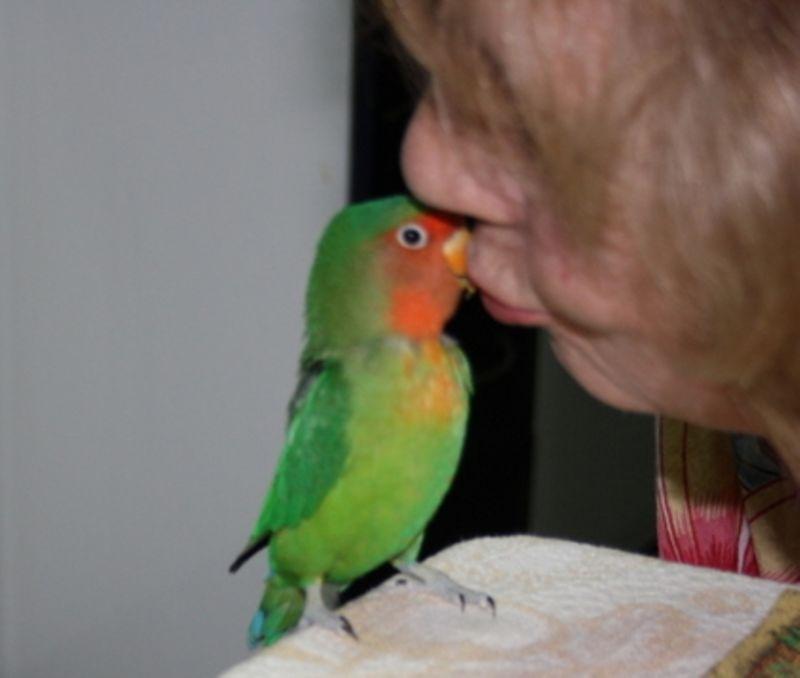 O beijoqueiro