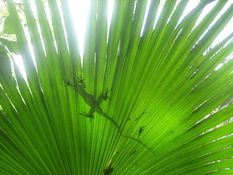 Gecko Leaf