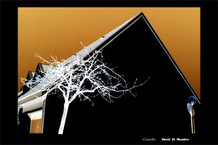 arbre Granville ville