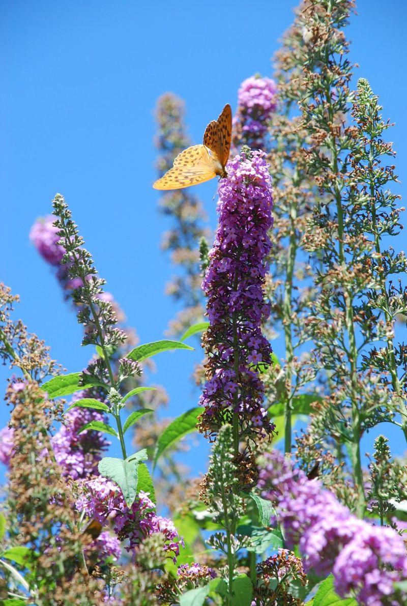 L'arbre au papillon
