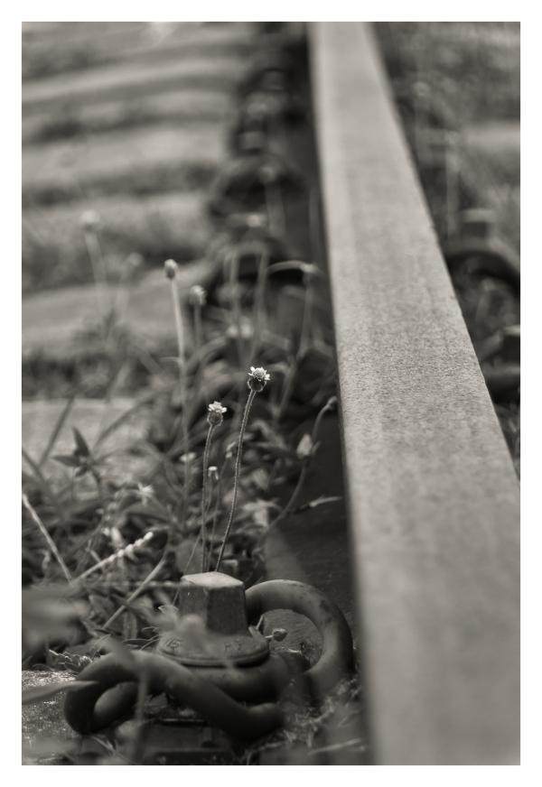 viene el tren