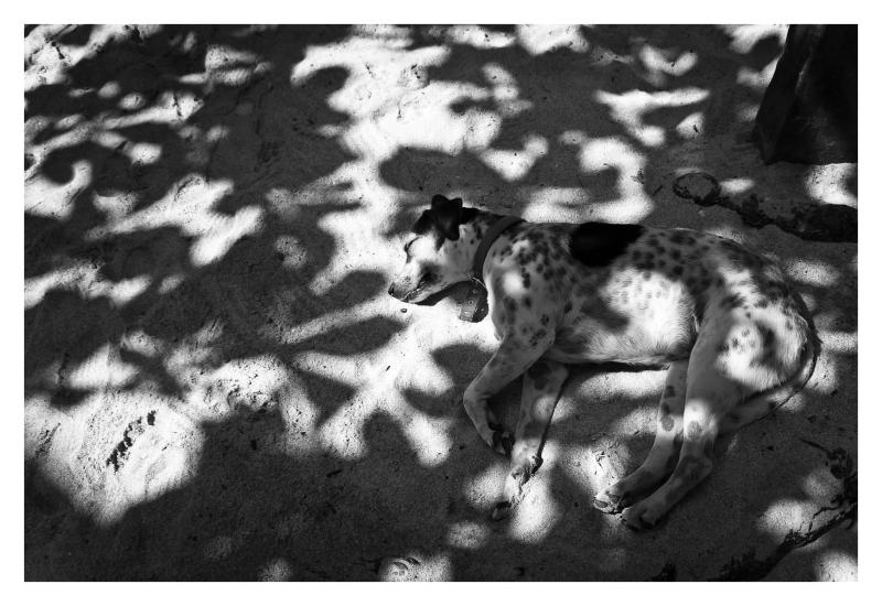 vida de perro