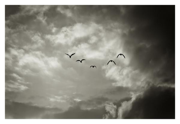 vuelos 1.0