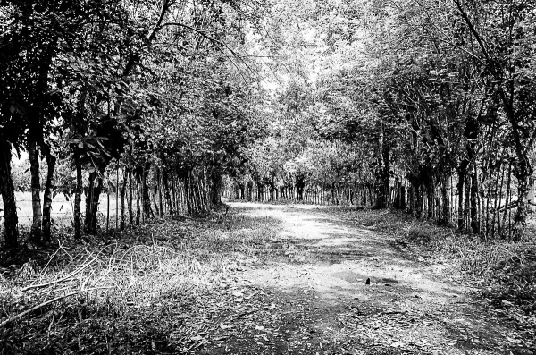Camino 2