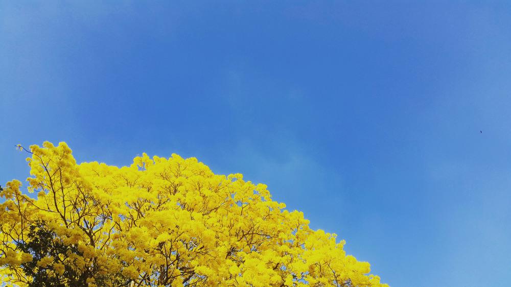 Amarillo #1