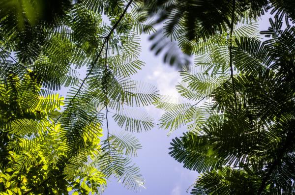 Cielo Verde
