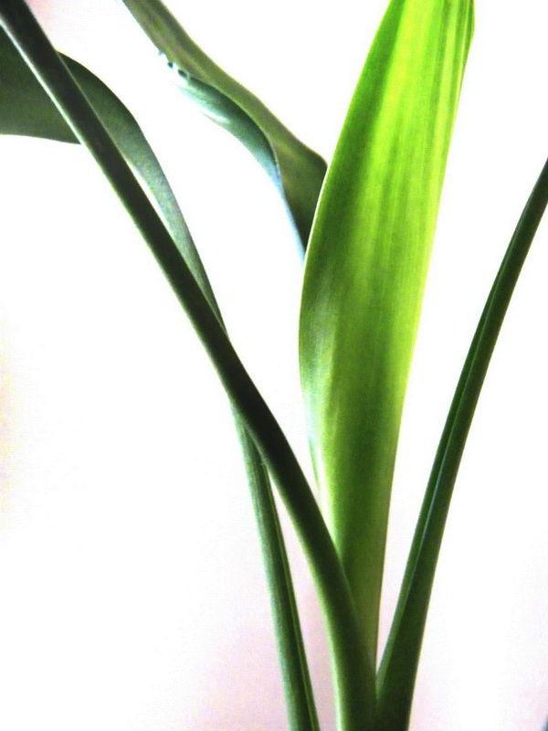 plant(1)