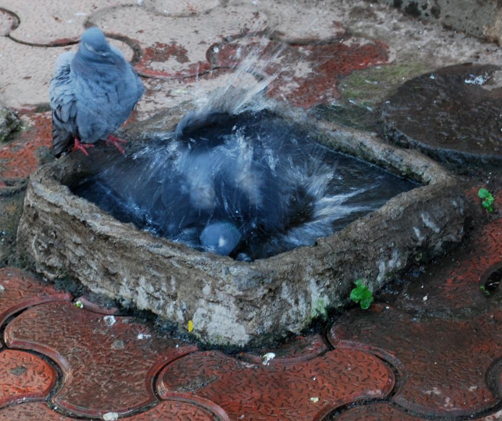 bathing mate (1 for 43)