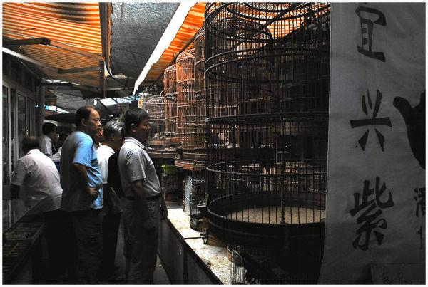 Shanghai market  xizanglu