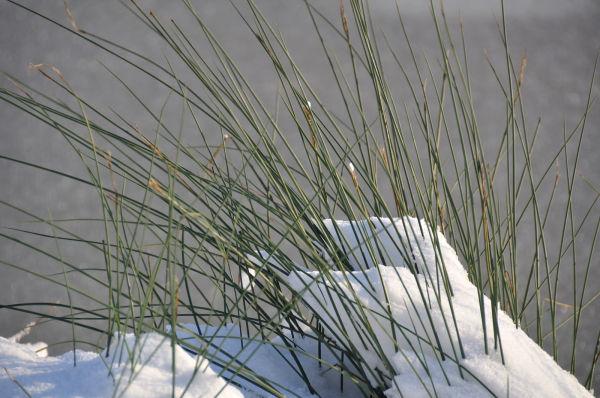 Snow landscape 4/8