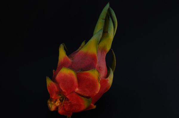 Dragon fruit - Pitaya