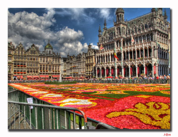 Brussels Flower Carpet 2010 (2/2)