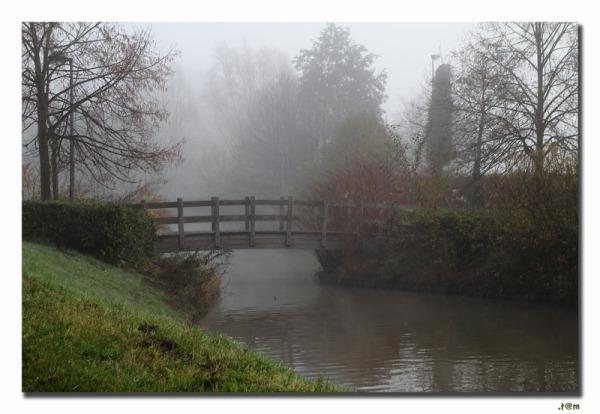 Mist Autumn