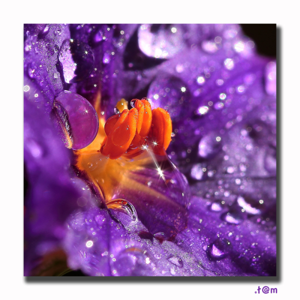 Purple flower droplets