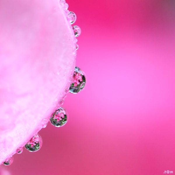 Droplets in pink