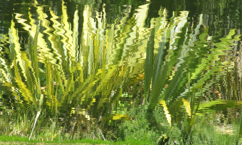 flax reflection