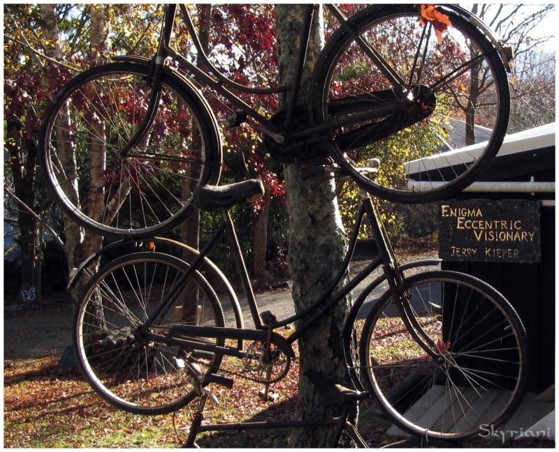 Tree Bicycles II