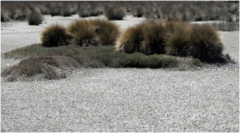 Tasman Bay Mudflats