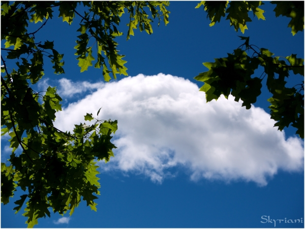 Cloud, Sky, Tree