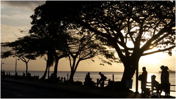 Tropical sillhouette