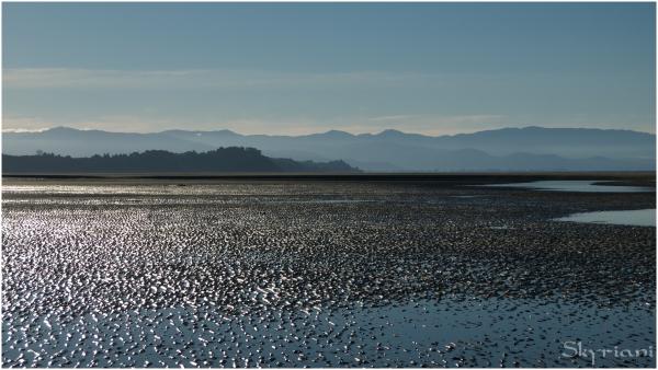 Low low low tide